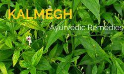 kalmegh plant health benefits