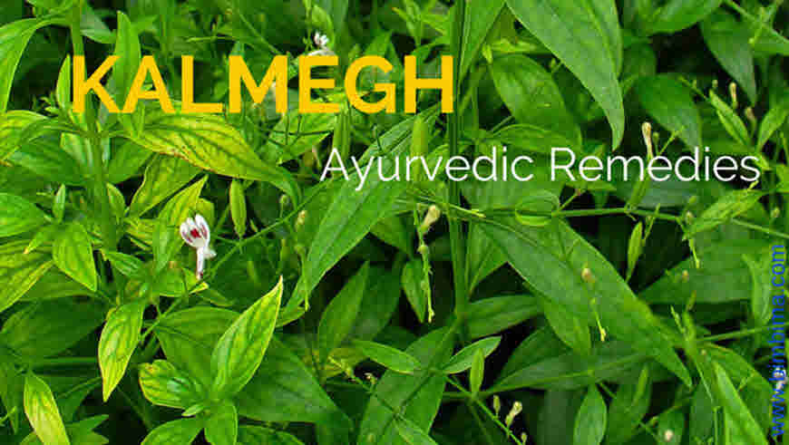 kalmegh plant health benefits