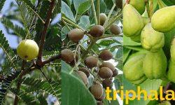 triphala churn