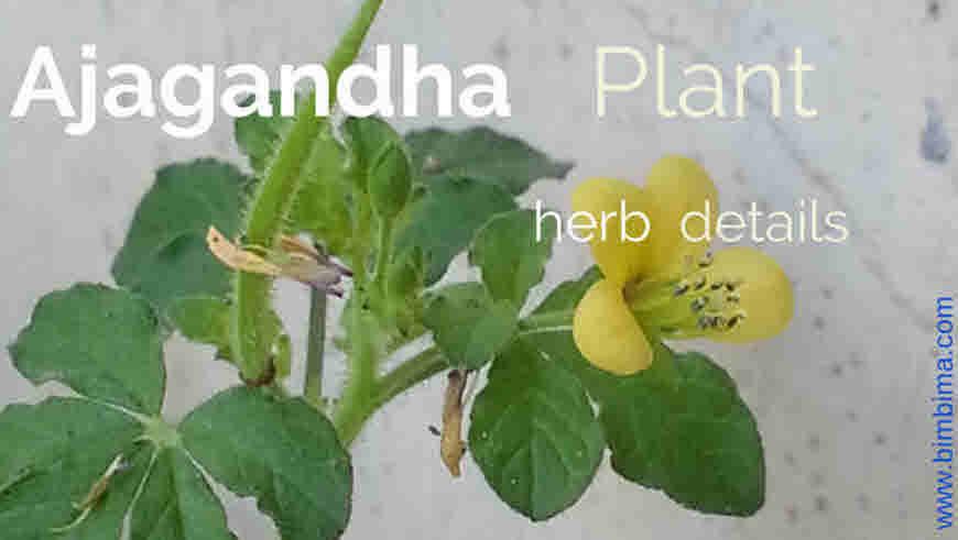 ajagandha medicinal uses