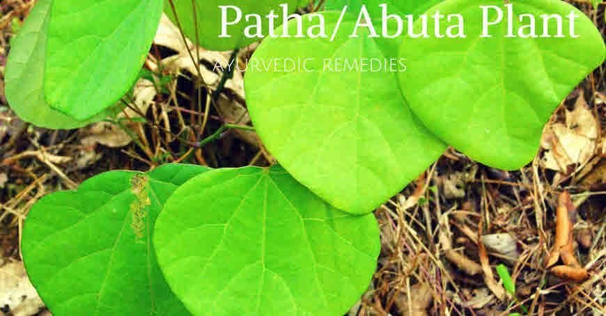 patha plant