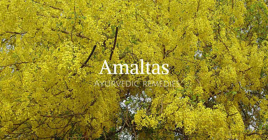 amaltas tree medicinal propertes