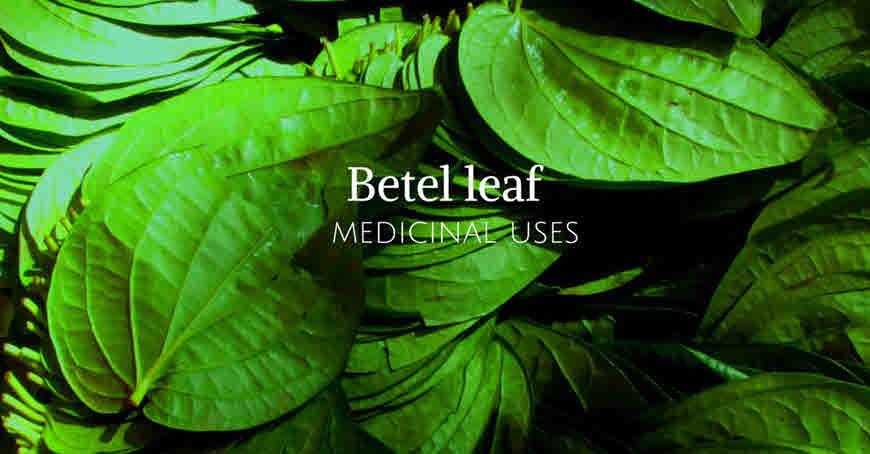 paan leaf medicinal uses