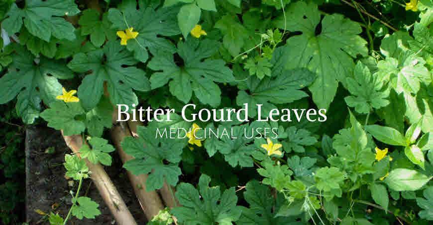 karela leaves