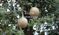 kaith fruit medicinal uses