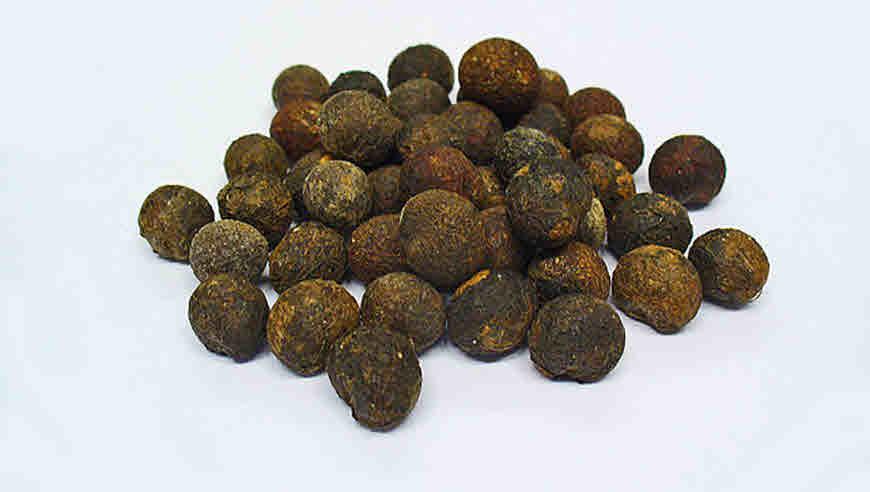anamirta cocculus medicinal uses