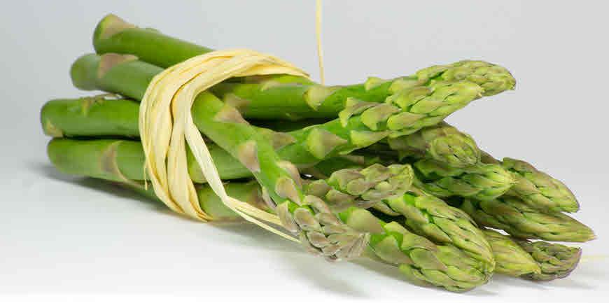 asparahus plant