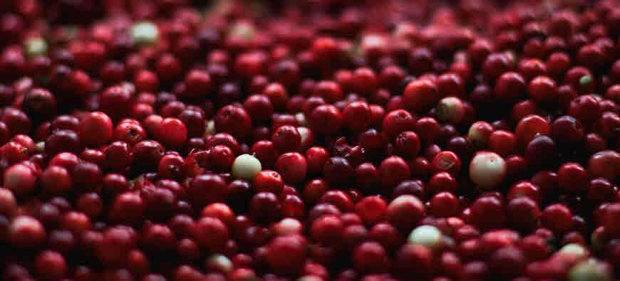 cranberry medicinal uses