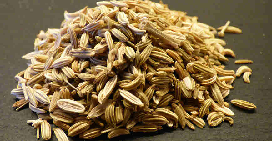 Fennel Seeds & Oil (Saunf) Benefits, Uses, Cautions and More